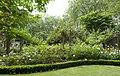 Downing Street garden path edge (7361631644).jpg
