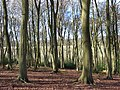 Doyley Wood, Pishill - geograph.org.uk - 755745.jpg