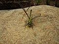 Dragonfly - panoramio - MikeStep.jpg