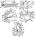EB1911 Mollusca - five classes.jpg