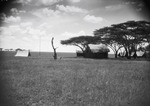 ETH-BIB-Camp Serengeti-Kilimanjaroflug 1929-30-LBS MH02-07-0502.tif