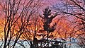 Early November sunset - Fin de journée à Laval - panoramio.jpg