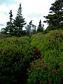 East Coast Trail (42225769370).jpg
