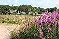 Easter Bogs - geograph.org.uk - 204500.jpg