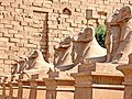 Egypt-3A-037 - Ram-headed Sphinxes (2217351706).jpg