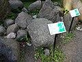 Eiszeitgarten Buckow (Märkische Schweiz) Revsund-Granit.JPG