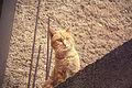 El gato (8592891995).jpg