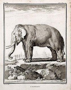 Éléphant (gravure du XVIIIesiècle)