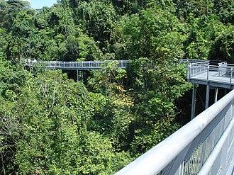 Southern Ridges - Forest Walk