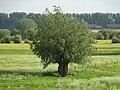Emmerich-Praest Bienener Altrhein PM18-06.jpg