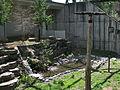 Enclos des bouquetins - jardin zoologique du québec - 2005-07.jpg