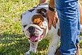 Encontro Dog Institute (41038157405).jpg