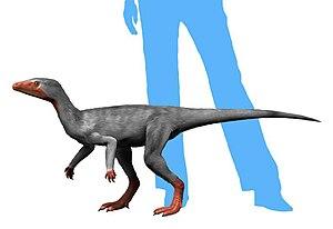 Un éoraptor
