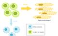 Esquema diferenciación entre EICH y EICT.png