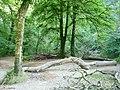 Exmoor , Tarr Steps Woods - geograph.org.uk - 1507883.jpg