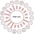 FABP, proteína que se une a ácidos grasos.jpg