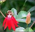 FLOWERS 4 (7238026294).jpg
