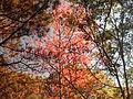 Fall at FLSP (5249374534).jpg
