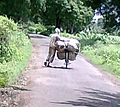 Farmer carrying fodder on bicycle.jpg