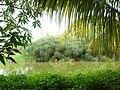 Fauna y flora alrededores de una pequeña laguna, en Puente Ayala, Edo Anzoategui.JPG