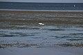 Faune marine Sayada, janvier 2018 - DSC 7504.jpg