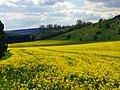 Field - panoramio (57).jpg