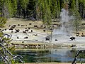 File-Bison herd at mud pots across the river from Mud Volcano;-Diane Renkin;-October 2012;-Catalog 18978d;-Original DSCN8541 (e1184b23-7b75-4c3f-9fdf-83427f890d3a).jpg