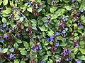 Fiori nel giardino.jpg