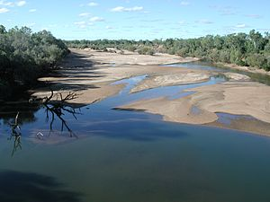 Fitzroy River (Western Australia) - Fitzroy River, looking north from bridge at Fitzroy Crossing