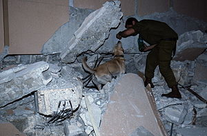 Oketz Unit - A canine handler from the IDF Oketz Canine Unit and his dog in the ruins of the Haiti UN headquarters, trying to locate survivors under the rubble. January 16, 2010.