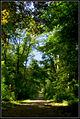 Flickr - Laenulfean - forest way.jpg