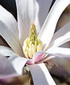 Flickr - Michael Gwyther-Jones - Spring (3).jpg