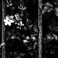 Flor preto e branco.jpg
