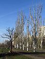 Florentsii street Kiev a.JPG
