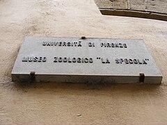 Museo di storia naturale sezione di zoologia La Specola