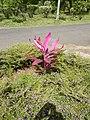 Flower - panoramio - georama.jpg