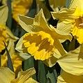 Flower 3422.jpg