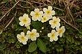 Flowers Mull, 2014 (13940645413).jpg