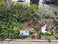 Flowers on West Vale, Little Neston.JPG