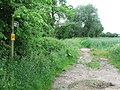 Footpath - geograph.org.uk - 832165.jpg