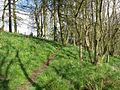 Footpath above Cartland Craigs - geograph.org.uk - 164329.jpg