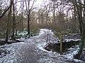 Footpath and footbridge in Blean Woods - geograph.org.uk - 1652807.jpg