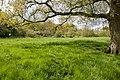 Footpath approaching Boarhunt Mill - geograph.org.uk - 1283252.jpg