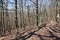 Forêt Départementale de Beauplan à Saint-Rémy-lès-Chevreuse le 14 mars 2018 - 23.jpg