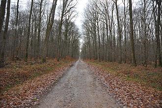 "Forest of Tronçais - path near the ""Chêne carré"" (December 2011)"