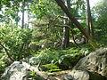 Forêt de Fontainebleau 1 - P1210791 LV.JPG
