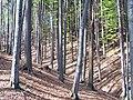 Forest 932.jpg