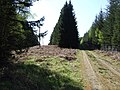 Forest track into Craigmore Wood - geograph.org.uk - 418607.jpg