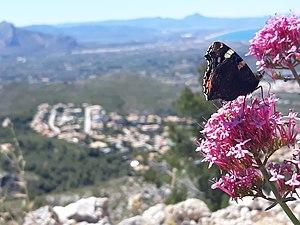 Fotografiando mariposas 2.jpg