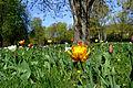 Frühling im Bad Mergentheimer Kurpark. 09.jpg